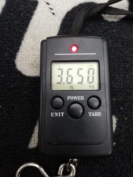 FENDER AMERICAN ORIGINAL 50S TELECASTER BUTTERSCOTCH BLOND 5